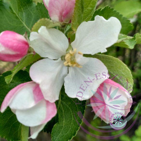 Bach virágterápia-Vadalma ( 10. Crab Apple) Bach virágesszencia