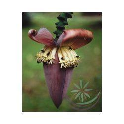 Banán ( Banana ) Éden virágesszencia