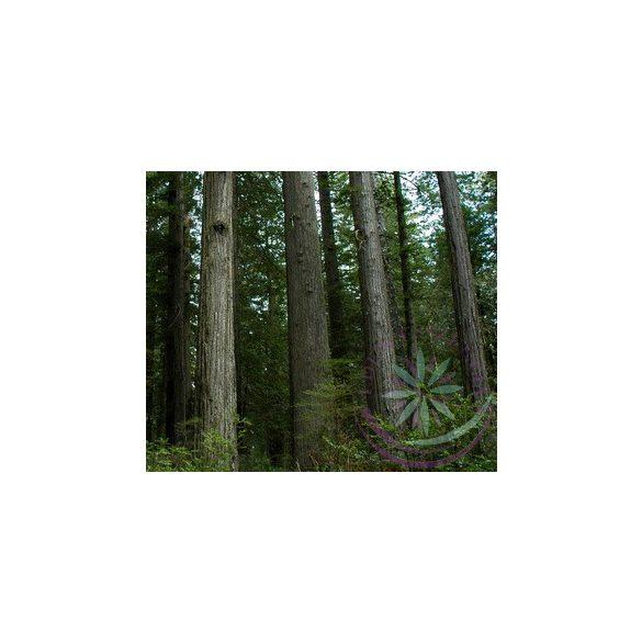 Parti mamutfenyő ( Redwood ) Éden virágesszencia