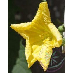 Szivacstök ( Luffa ) Éden virágesszencia