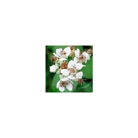 Vadszeder ( Black berry ) Éden virágesszencia
