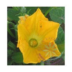 Tökvirág ( Squash ) Éden virágesszencia