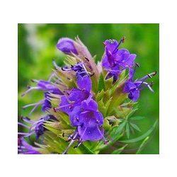 Kerti Izsóp (Hyssop ) Éden virágesszencia