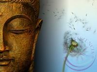 Buddha csepp- Éden virágesszencia keverék