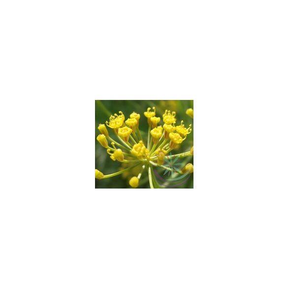 Kapor ( Dill)  Éden virágesszencia