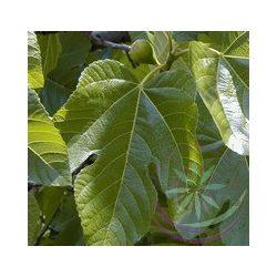 Fügefa ( Fig ) Éden virágesszencia