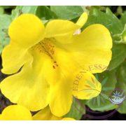 Bach virágterápia - Bohócvirág 20. Mimulus Bach virágesszencia