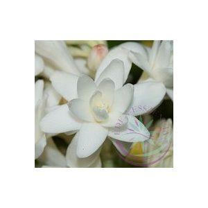 Tubarózsa (Tuberose) Éden virágesszencia