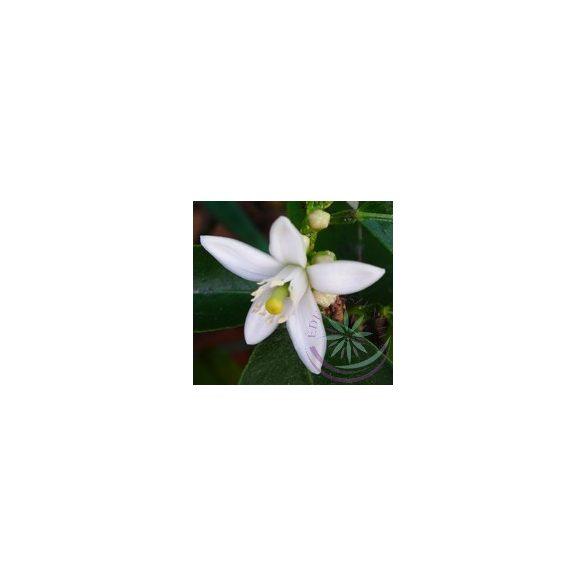 Citromfa ( Lemon ) Éden virágesszencia
