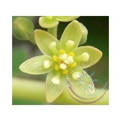 Avokádó ( Avokado ) Éden virágesszencia