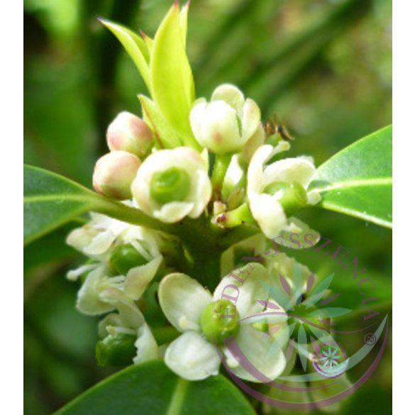 Bach virágterápia -Magyal (15. Holly) Bach virágesszencia