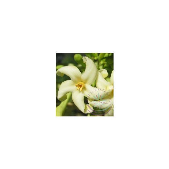 Papaya Éden virágesszencia
