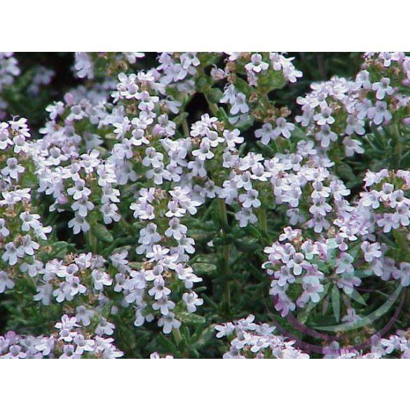 Kakukkfű ( Thyme ) Éden virágesszencia