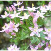 4. Kisezerjófű virágesszencia-Bach virágterápia