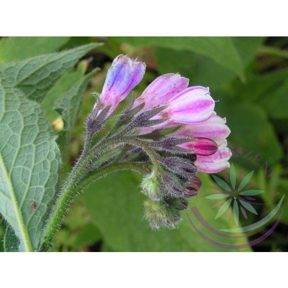 Fekete nadálytő ( Comfrey) Éden virágesszencia