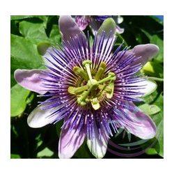 Golgotavirág ( Passion flower ) Éden virágesszencia
