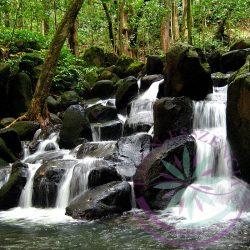 Bach virágterápia - Forrásvíz  27. Rock water Bach esszencia