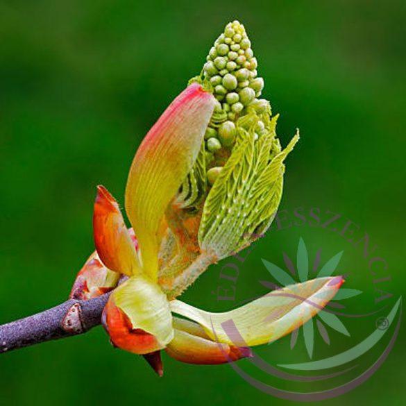 7. Vadgesztenyerügy virágesszencia -Bach virágterápia