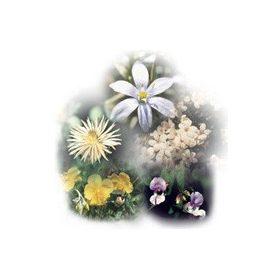 Bach virágterápia -Elsősegély csepp