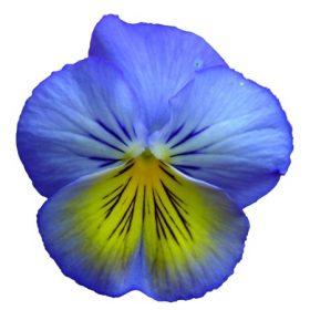 Éden virágesszenciák