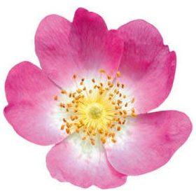 Bach virágterápia - Bach cseppek