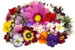 Összetett virágesszenciák