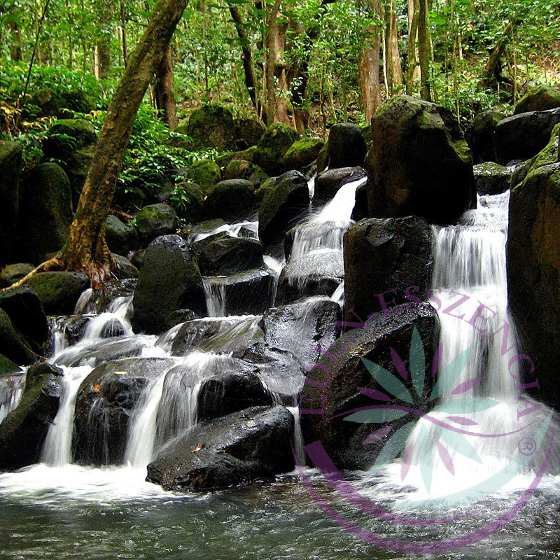 Forrásvíz  27. Rock water Bach esszencia